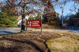 arnett animal hospital hyannis animal hospital arnett