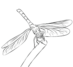 Dragonfly Coloring Sheets Pages Simple Best Images On Painting Bass Ma