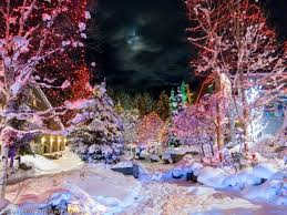 Becks Christmas Tree Farm Hartwell by 15 Best Christmas In Banff Images On Pinterest Banff Trains And
