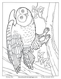 Full Size Of Coloring Pagereal Pages Real Snowy Owl Page