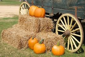 Ms Heathers Pumpkin Patch Louisiana by Halloween Events And Activities In Baton Rouge La