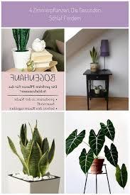 bogenhanf schlafzimmer pflanze pflanzen im schlafzimmer
