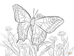 Click The Old World Swallowtail Coloring Pages