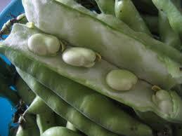 comment cuisiner les f es fraiches la récolte a été bonne acte 1 les fèves chez requia cuisine