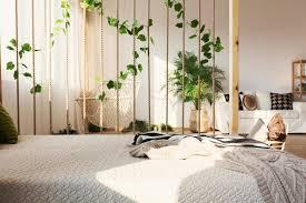 efeu als zimmerpflanze pflege standort sorten plantura