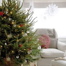Fraser Christmas Trees Uk by What Type Of Christmas Tree Should You Buy Christmas Decor