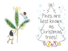 Christmas Tree Names by Chloe And Lenny U0027s Book Of Scottish Leaves And Trees U2014 Moira Zahra