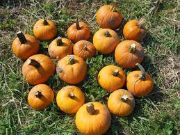 Pumpkin Patch Festival Milwaukee by 10 Best Pumpkin Patches Near Pittsburgh In 2016