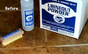 remove urine stains from grout cat urine cleaner
