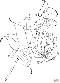 Best Free Ivy Flowers Coloring Books For Kids Printable