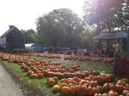 Pumpkin Patches Mankato Mn by Minnesota Grown Pumpkins Find Local Mn Pumpkins