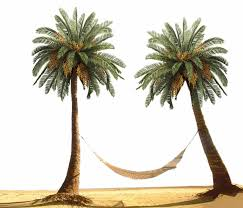 Palm Tree by designway24 on DeviantArt