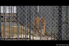 Free Tony Save Tony Save Him From The Activists A Nd Their Should Tony The Truck Stop Tiger Go Free A Fight Over A The New York Times Owner Of Truck Stop Fighting To Save Live Tiger Exhibit Louisiana Has On Display In His Parking Lot Celebrates National Driver Appreciation Week Petion Update Keep Roaring For Tony Youtube Home Facebook Roundup Back In Headlines Another Kelty Animal Rights Group Sues Law Competitors Revenue And Employees Owler Company