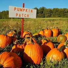 Pumpkin Patch Caledonia Mi by Gammy Woods Family Campground 2 Photos Weidman Mi Roverpass