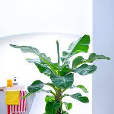 pflanzen im badezimmer diese sorten vertragen viel
