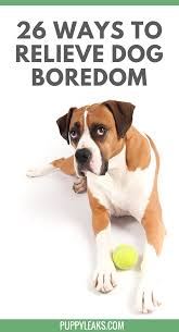 26 Quick & Simple Ways To Relieve Dog Boredom - Puppy Leaks Amazoncom High Tech Pet Humane Contain X10 Rechargeable Multi Dog Gone Problems How To Keep Your Dog Safe Around Weed Killer Canine Hoarders Why Do Dogs Bury Food Petful What Should I If My Dies At Home The 25 Best Proof Fence Ideas On Pinterest Digging Dogs Blog Ruff Life Outfitters Animal Tips Archives Tupelolee Society Wireless Fence 2017 Top Consumer Picks Expert Unbiased Reviews Logic Lol You Stop Feeding Your Commercial 26 Quick Simple Ways To Relieve Boredom Puppy Leaks Is It Legal A In Yard Willamette Week