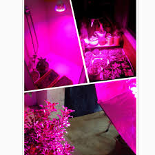 discount china wholesale mr16 5w led plant grow light hydroponic
