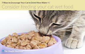 water for cats 7 creative ways to encourage your cat to drink more water