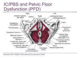 Pelvic Floor Dysfunction Symptoms Constipation floor page 1548 estate buildings information portal