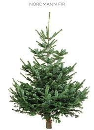 Here Is A List That Breaks Down All The Main Characteristics Of Each Type Most Popular Christmas Trees