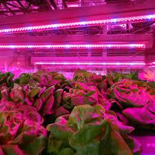 LED Plant Grow Lights 5050 Grow LED Flexible Strip Tape Light 4 1