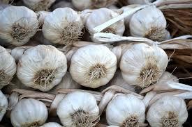 planting garlic in the fall farmer s almanac