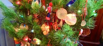 Christmas Tree Species Nz by The Foraged Christmas Tree Pinus Radiata And Decorations The
