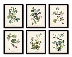 Audubon Birds Print Set No24 Of 6 Vintage Bird Prints