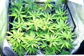 plante dans chambre à coucher plantes depolluantes chambre a coucher markez info
