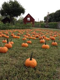 Pumpkin Farms In South Georgia by The 7 Best Pumpkin Patches Near Nashville In 2016
