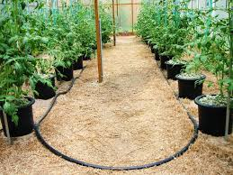 The Urban Farm 20 Hydroponic Container Vegetable Gardening System. Hydroponic Home Garden Backyard Food Solutionsbackyard Oc Aquaponics Project Admin What Is Learn About Aquaponic Plant Growing Photos Friendly Picture With Amusing Systems Grow 10x The Today Bobsc Ezgro Amazoncom Vertical Gardening Vegetable Tower Indoor Outdoor From Fish To Ftilizer Greenhouse Im In My City Back Yard Yes I Am Satuskaco
