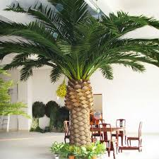 prix des palmiers exterieur prix palmier exterieur