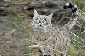 mountain cat mountain cat enter your name here