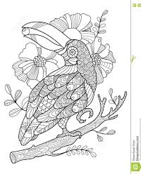 Adult Coloring Bird Toucan Stock Vector Illustration Of Elements