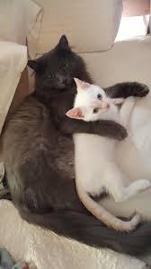 Best friends spooning in bed Imgur