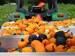 Pumpkin Patch Columbus Ga by 10 Pumpkin Patches To Visit In Georgia This Fall Tripstodiscover Com