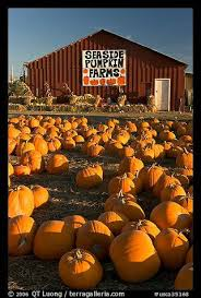 Kent Island Pumpkin Patch by 37 Best Just For Fall Images On Pinterest Pumpkin Patches