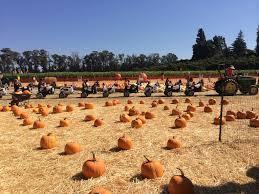 Moorpark Pumpkin Patch Underwood Family Farms by Santa Monica Snapshot Underwood Family Farms
