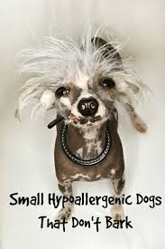 Non Shed Dog Breeds Large by Small Hypoallergenic Dogs That Don U0027t Bark Much Dog Vills