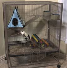 housing for rats and mice cage accessories bedding and location