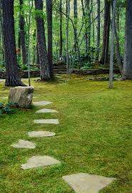 How To Grow Moss | Moss And Stone Gardens Blog | Gardening ... 25 Trending Lawn Seed Ideas On Pinterest Repair The Beer Portfolio Mowing Ferlization Treatment Pauls Best Goodbye Grass 7 Inspiring Ideas For A No Mow Backyard Artificial 12 Stunning Modern Itallations Install Balinese Garden Bali What Is Carpet How To Grow Things Consider Before Use Edging To Keep Weeds And Away From Flower Beds Hgtv Front Yard Landscape No Grass Pinteres Dwarf Mexican Feather Google Search Desert Landscape Outgrowing The Traditional Scientific American Blog Restore With Dead Soil After 9 Steps
