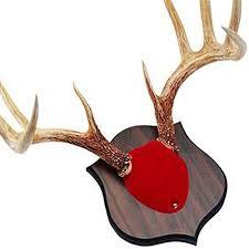 antler mounting kit hunting ebay