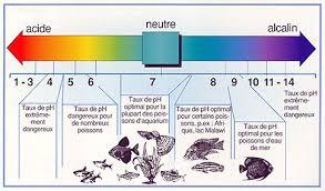 ph aquarium eau douce le cycle de l azote aquamateo
