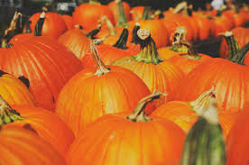 Myers Pumpkin Patch Facebook by Guide To Pumpkin Picking In Indiana I Love Halloween