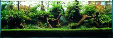 Aquascape Design Designs Appartment Aquascape Pool Design Inc ... Cuisine Perfect Aquascape Aquarium Designs Ideas With Hd Backyard Design Group Hlight And Shadow Design For Your St Charles Il Aqua We Share Your Passion For Success Classic Series Grande Skimmer Aquascapes Amazoncom 20006 Aquascapepro 100 Submersible Pump Pond Supply Appartment Freshwater Custom 87 Best No Plant Images On Pinterest Ideas