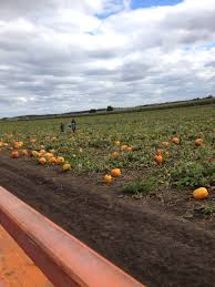Pumpkin Farms Illinois Goebberts by Halloween