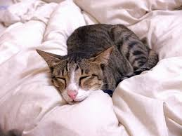 renal failure in cats 9 things you should about feline chronic kidney disease catster