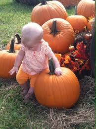 Pumpkin Patch Naples Fl 2015 by Cornfusion Maze U0026 Fall Festival Pumpkin Patch Smith Family