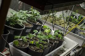 medizinische wirkung cannabis business insider