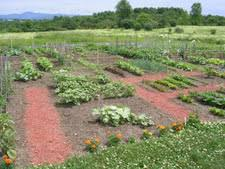 Garden Design Garden Design with Ve able Garden Design